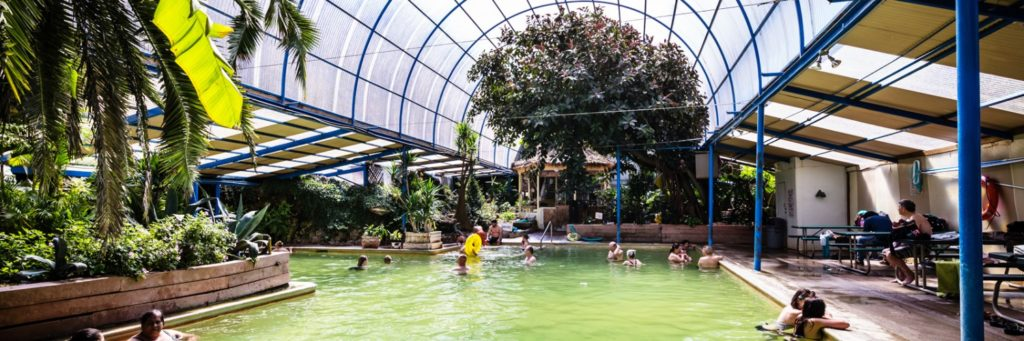 Panorama of indoor pool with glass roof and lots of trees inside, people swimming and lounging on side.